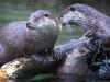 otter-50357_640